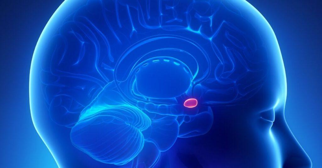 Grip op je stress brein